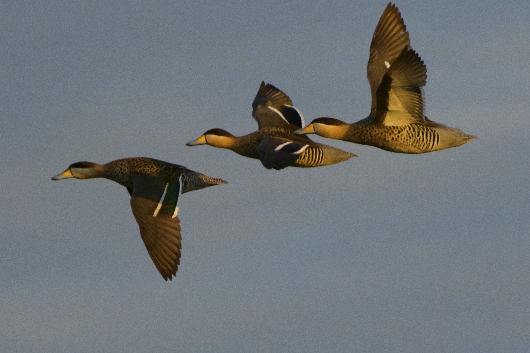 duck the image hunting early larger avery blinds missouri view from tactics tips outdoors photos teal bags for blind pros