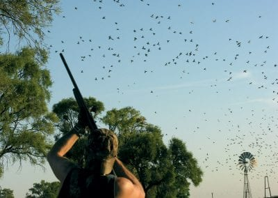 dove-hunting-argentina