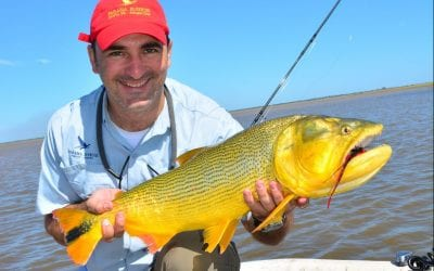 Fishing the Famed Golden Dorado in Argentina